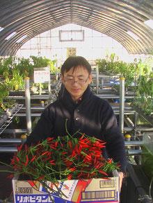 チョウザメアクアポニックスで・・・タカノツメ収穫しましたよ(2012年1月12日(土))!