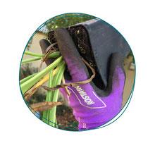Cours de jardinage dans le 94 - Votre coach jardin vous apprendra à jardiner chez vous