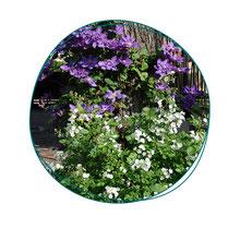 Conception d'un jardin avec une palette végétale adaptée