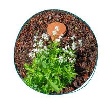Formation de jardinage à Paris - Votre coach jardin vous apprendra à jardiner en faveur de la biodiversité