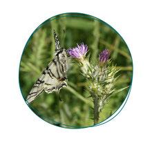 Cours de jardinage à Paris - Votre coach jardin vous apprendra à développer la biodiversité dans votre jardin