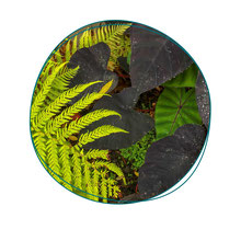 Cours de jardinage à Paris - Votre coach jardin vous apprendra à choisir les plantes adaptées