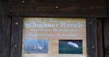 """""""tierisch schöne Impressionen"""" auf der Scheibner Ranch"""