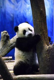 台北市立動物園2014年1月日鈴木玲子さん撮影(毎日新聞のWebサイトより)