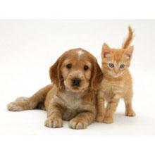 magnétiseur - chat - chien