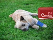 Erste Hilfe bei Hunden - snautz.de