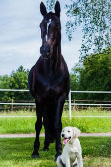Mit Tieren sprechen - Foto Klient Pferd Lady