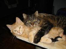 Mit Tieren Sprechen - Foto Dusty und Churchill