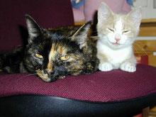 Mit Tieren Sprechen - Foto Klienten Curry und Pancho