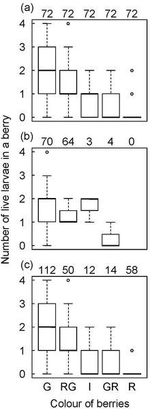 図4.1月の野外(a,b)と鳥による持ち去りを除去した果実(c)の色ごとの果実内の生存幼虫数.G,RG,I,GR,Rはそれぞれ,緑色,赤緑色,中間色,緑赤色,赤色を表す.