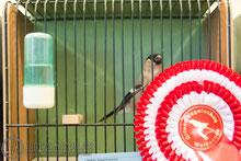 30.11.2014 Vogelausstellung