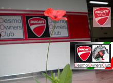 ...i Ducatisti fioriscono...clicca l'immagine
