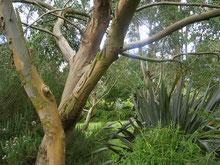 L'arboretum de Huelgoat