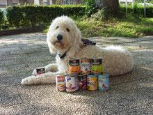 Hund und Dosen mit Hundefutter