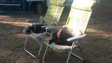 Camping-Hunde