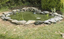 nature pond with blanket weed