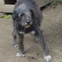 Save Valcea'dogs ⏰~(?) 📐~50+cm