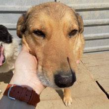 Hunde vom PS ADJUD ⏰~2011 📐~60+cm