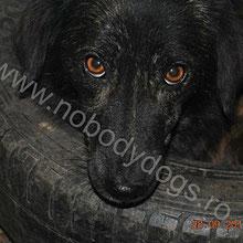 Nobody Dogs ⏰~2013 📐~40+cm
