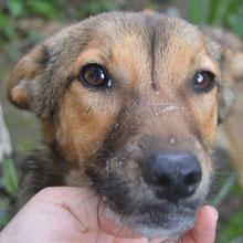 Save Valcea'dogs ⏰~2015 📐~40+cm