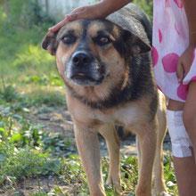Save Valcea Dogs ⏰~2010 📐~45+cm