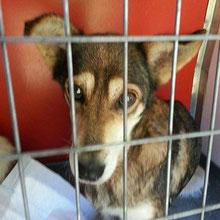 Dogs at Vincent´s shelter ⏰~2010 📐~40+cm