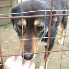 ANCA Helps Animals ⏰~2013 📐~45cm