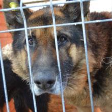 Save Valcea'dogs ⏰~2004 📐~50+cm