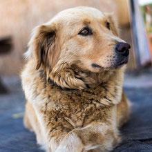 Arme Hundeseelen aus Rumä. ⏰~2012 📐~45+cm