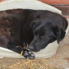 ANCA Helps Animals ⏰~2014 📐~45cm