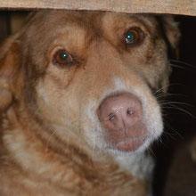 ANCA Helps Animals ⏰~2010 📐~50+cm