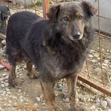 Hunde vom PS ADJUD ⏰~2011 📐~50cm