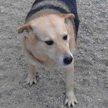 Dogs at Vincent´s shelter ⏰~2010 📐~45+cm