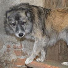 Save Valcea´s dogs ⏰~2011 📐~45+cm