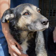 ANCA Helps Animals  ⏰~2010 📐~45-50cm