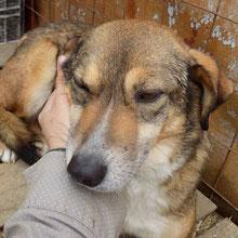 Hunde vom PS ADJUD ⏰~2010 📐~50+cm