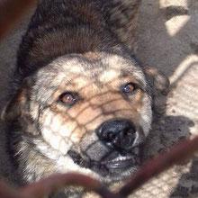 Breasta Dogs at Roxana ⏰~2015 📐~40-45cm