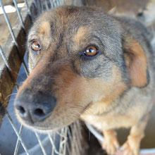 Save Valcea'dogs  ⏰~2012 📐~40cm