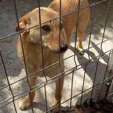 Hunde vom PS ADJUD ⏰~2012 📐~50+cm