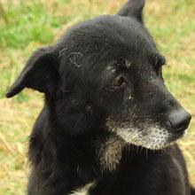 Dogsouls ⏰~2008 📐~45cm