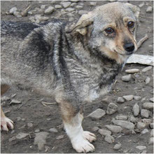 We care about strays ⏰~2010 📐~30+cm