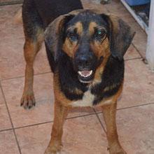 Save Valcea Dogs ⏰~2009 📐~40+cm