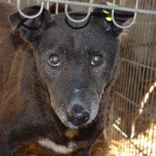 Save Valcea'dogs ⏰~2011 📐~40+cm