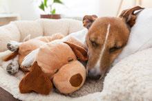 Hundebetten und Decken