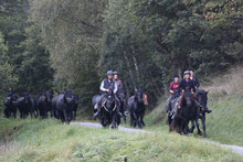 "3 days in ariege : the ""transhumance "" with our merens horses"
