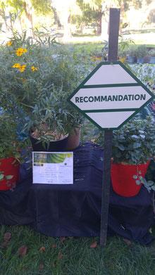 Une Recommandation pour Tagetes Lemonii