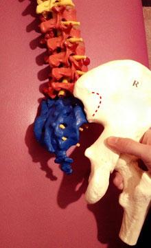 仙腸関節面の説明