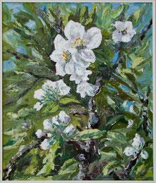 Nr.427 Apfelblüten