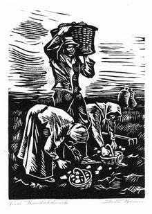Nr. 1892 Kartoffelernte