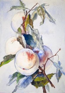 Nr.1416 Pflaumen 1943